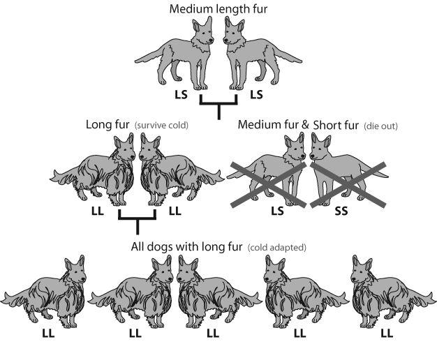 科学的でない進化論(その1)